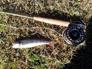 Brook Trout — Zartafishing 04