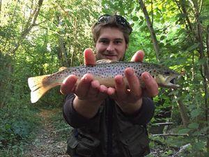Brown Trout — Kévin Bonningre