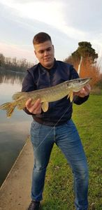 Northern Pike — Thomas Herault