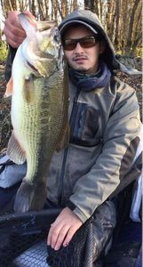 Largemouth Bass — Jeff Belghit