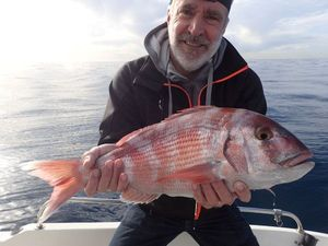 Red Porgy — Philippe Troin