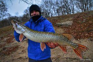 Northern Pike — Jimmy Tardieu