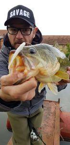 Largemouth Bass — Wilfried Jovin