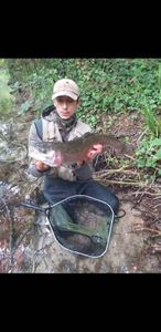 Rainbow Trout — Florian B
