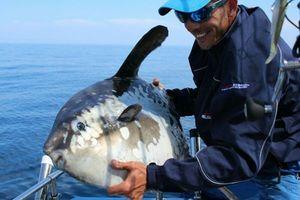poisson lune '' molamola '' — Samuel Elgrishi Moniteur et Guide de pêche