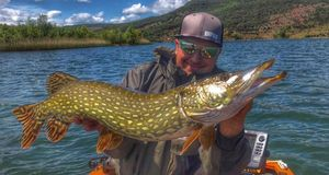 Northern Pike — Vincent Lopez