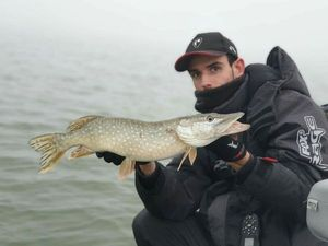 Northern Pike — Enzo Méchet
