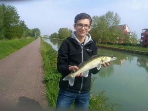 Zander — Elsass Fishing