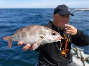 Common Pandora — Sebcricri Fishing