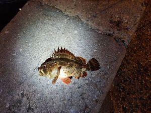 Brown Scorpionfish — Sylvain Habert