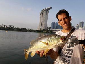 Peacock Bass ( Monoculus) — Karim Saada