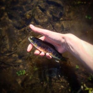 Brown Trout — Eloi Felicelli