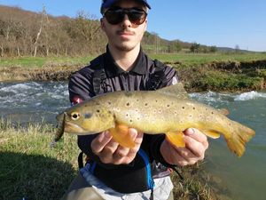Brown Trout — Mathieu Thevenin