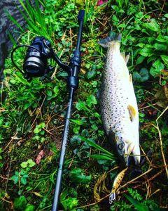 Brown Trout — Yagofish
