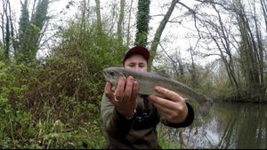 Rainbow Trout — Thibfishing 70