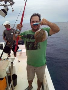 Blunthead Puffer (Balloonfish) — Mário Rodrigues
