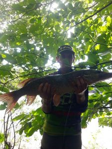 Northern Pike — Arnaud Croguennec