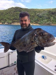 Snapper (Squirefish) — Clayton Whiddett