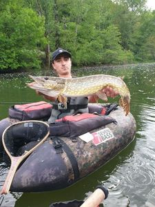 Northern Pike — Todd Perré