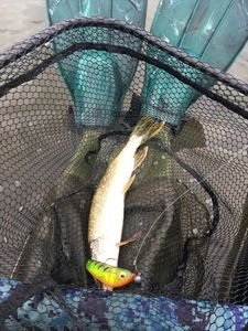 Northern Pike — Kevin LP