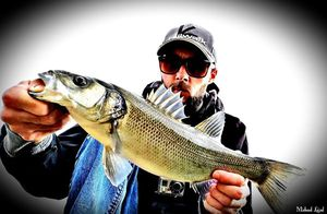 European Bass — Myk Fishingddict
