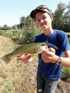 Largemouth Bass — Robin  Albert