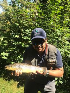 Brown Trout — Greg FishFriender
