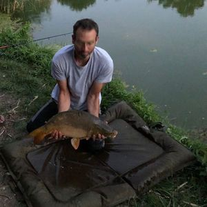 Mirror Carp — Fish & Fils