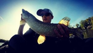 Northern Pike — cheuvrautique