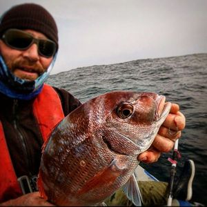 Red Porgy — Raph CSMPêche