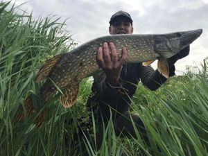 Northern Pike — Quentin Laoureux