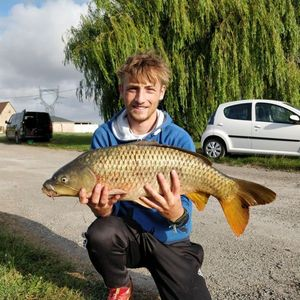 Common Carp — Jean-Baptiste Bodecot