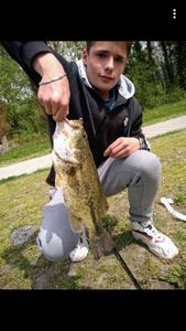 Largemouth Bass — Louis Martin