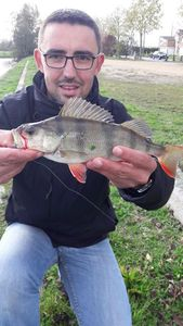 European Perch — Adrien Lieuron
