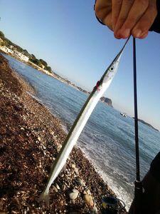 Garfish — Matys Pugliesi