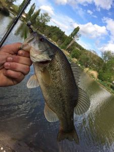 Smallmouth Bass — Adrien fishingriverandsea