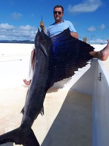 Pacific Sailfish — Thierry Gomez