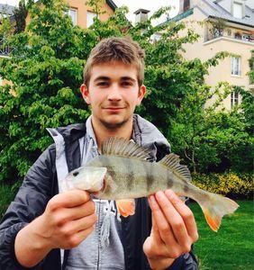 European Perch — Charles Gille