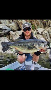 Largemouth Bass — Alexis Braynas