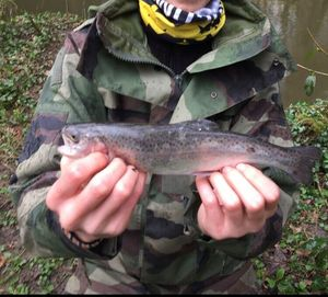 Rainbow Trout — Mathis Colle