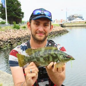 Ballan Wrasse — Fishing For You Gaëtan