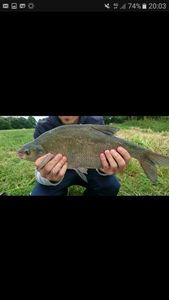 Common Bream — Jordan Chevreuil