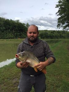Mirror Carp — Yann Berthet