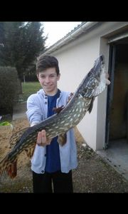 Northern Pike — Antoine Crepel