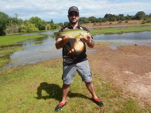 Largemouth Bass — Mendel Frankel