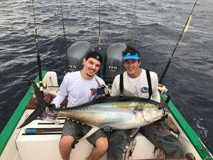 Yellowfin Tuna — Damien Zissman