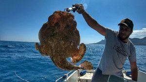 Angler Fish — Nissa Djé