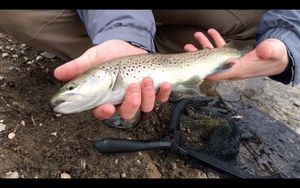 Brown Trout — Julo Fishing