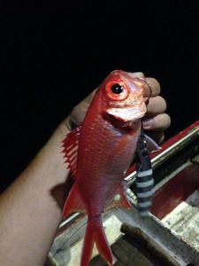 Pinecone Soldierfish — Raphael Du Merilis