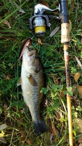 Largemouth Bass — Pascal GUILLAUME